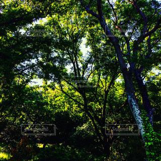 #森#森の中#緑な世界#緑のアート#森林浴#森林浴ヒーリング#森林浴マイナスイオン#癒しの森の写真・画像素材[553777]