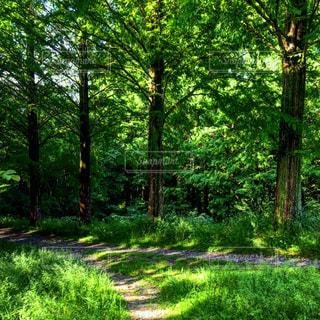#森の散歩道#森林浴#森林浴ヒーリング#森林浴マイナスイオン#森の空間#森の空気#森の癒し#癒しの空間の写真・画像素材[556512]