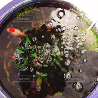 魚の写真・画像素材[388571]