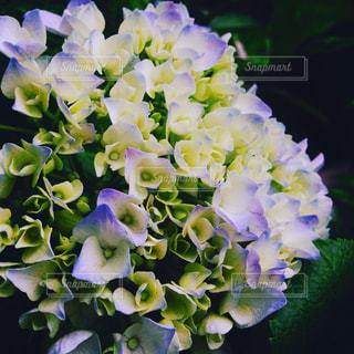 花の写真・画像素材[549346]