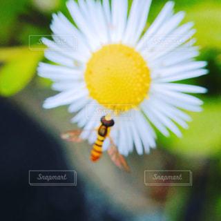 花の写真・画像素材[549347]