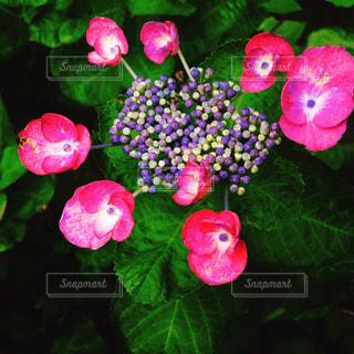 花の写真・画像素材[549351]