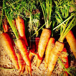 野菜の写真・画像素材[549353]