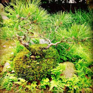 クローズ アップ庭園のの写真・画像素材[713192]