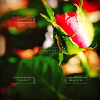 近くの花のアップの写真・画像素材[713199]