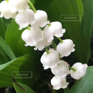 花の写真・画像素材[388921]
