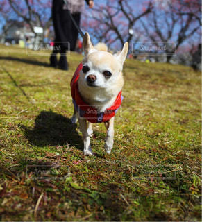 犬の写真・画像素材[388962]