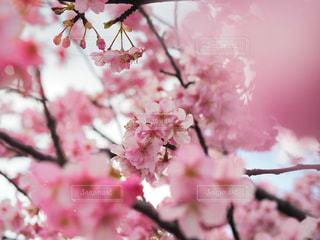 春 - No.388846