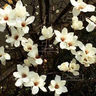 春 - No.394994