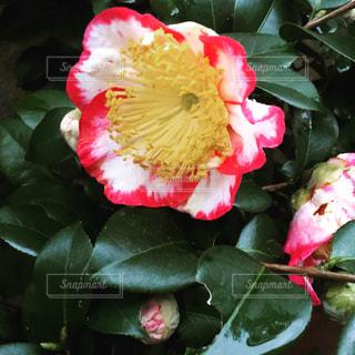 花の写真・画像素材[431271]
