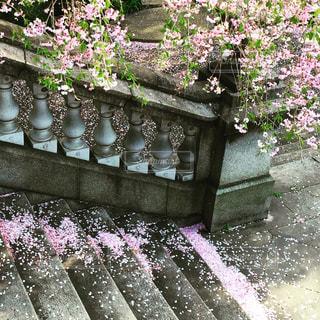 花の写真・画像素材[438799]