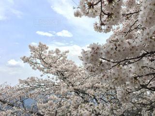 花の写真・画像素材[439404]