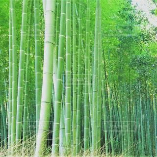 京都 - No.565674