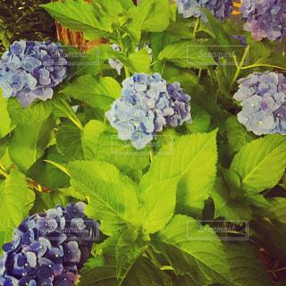 花の写真・画像素材[565676]