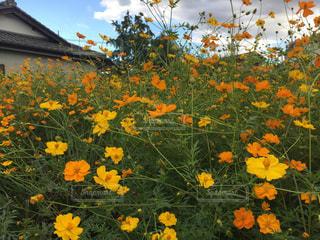 黄色の花 - No.748940