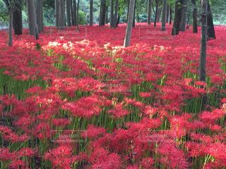 赤い花は緑豊かな緑のフィールドに立っています。 - No.748945