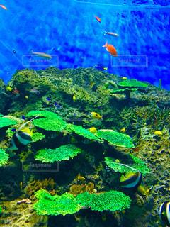 魚の写真・画像素材[395296]