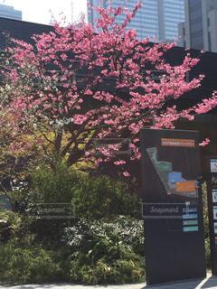 No.397297 桜