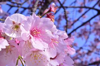 春の写真・画像素材[397732]