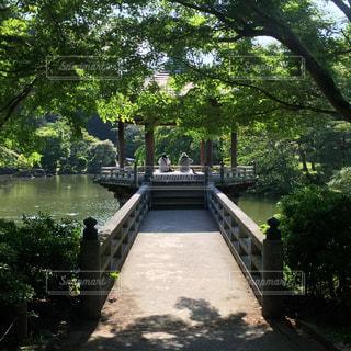 水の体の横にあるツリーの写真・画像素材[732406]