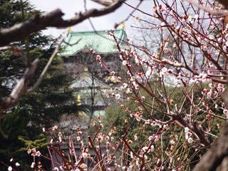 大阪城の写真・画像素材[736072]