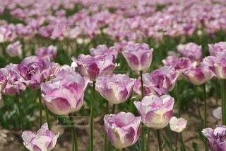 近くの花のアップの写真・画像素材[1711650]