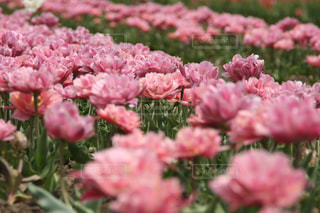 近くの植物にピンクの花のアップの写真・画像素材[1711654]