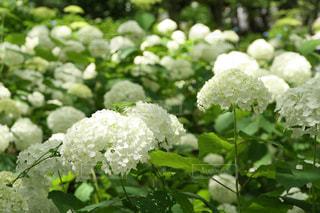 花の写真・画像素材[2158054]