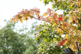 秋の写真・画像素材[2158057]