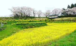 春の写真・画像素材[451980]