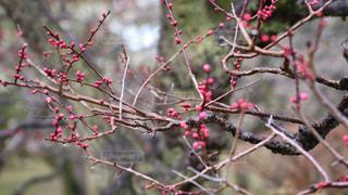 春の写真・画像素材[389300]