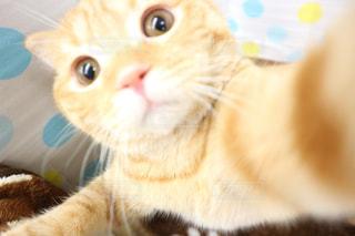 猫 - No.518813