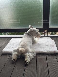 犬 - No.390546