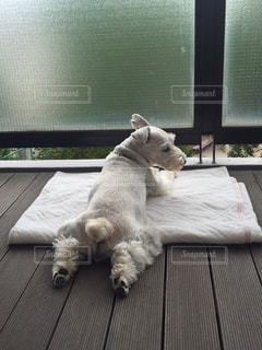 No.390546 犬