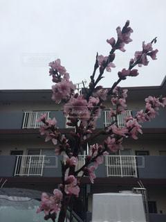 #春の写真・画像素材[419598]