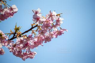 花の写真・画像素材[393824]