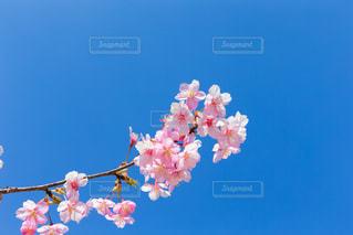花の写真・画像素材[393825]