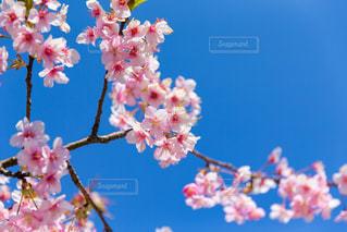 花の写真・画像素材[393826]
