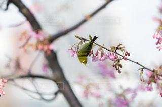 自然の写真・画像素材[396401]