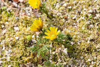 花の写真・画像素材[397027]