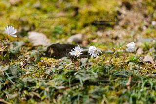 花の写真・画像素材[397029]