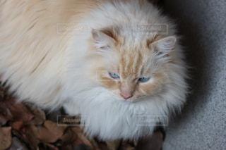猫の写真・画像素材[390484]