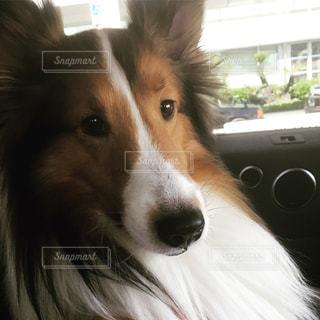 犬 - No.542261