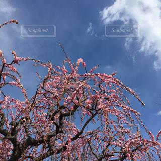 空の写真・画像素材[390361]