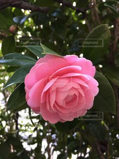 花の写真・画像素材[412874]