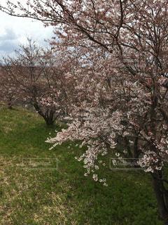 春の写真・画像素材[416986]