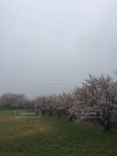 春の写真・画像素材[419603]