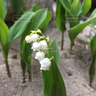 花の写真・画像素材[453614]