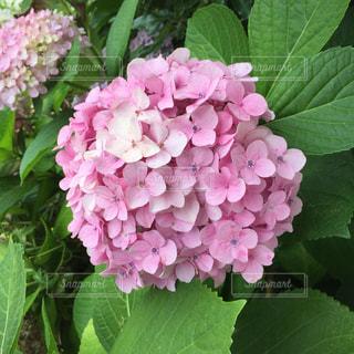 近くの花のアップの写真・画像素材[1038616]