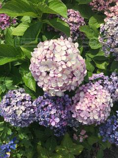 花の写真・画像素材[2253882]